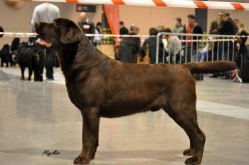 National Dog Show Będzin 22.01.2012, placed 1, CAC, under breeder/judge Siv Sando (Norway)