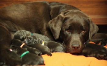 First pictures of the puppies taken in the first day of thei life.