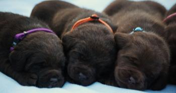 Our pups are over 3 weeks now