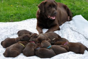 Nasze maluchy w wieku 2,5 tygodni