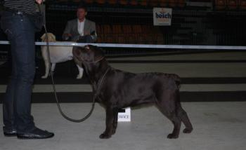 International Dog Show Katowice, March 2010, First Place in Puppy Class & Best Puppy in Breed